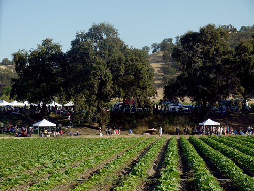 Capay Tomato Festival 2012 | by Farm Fresh To You -