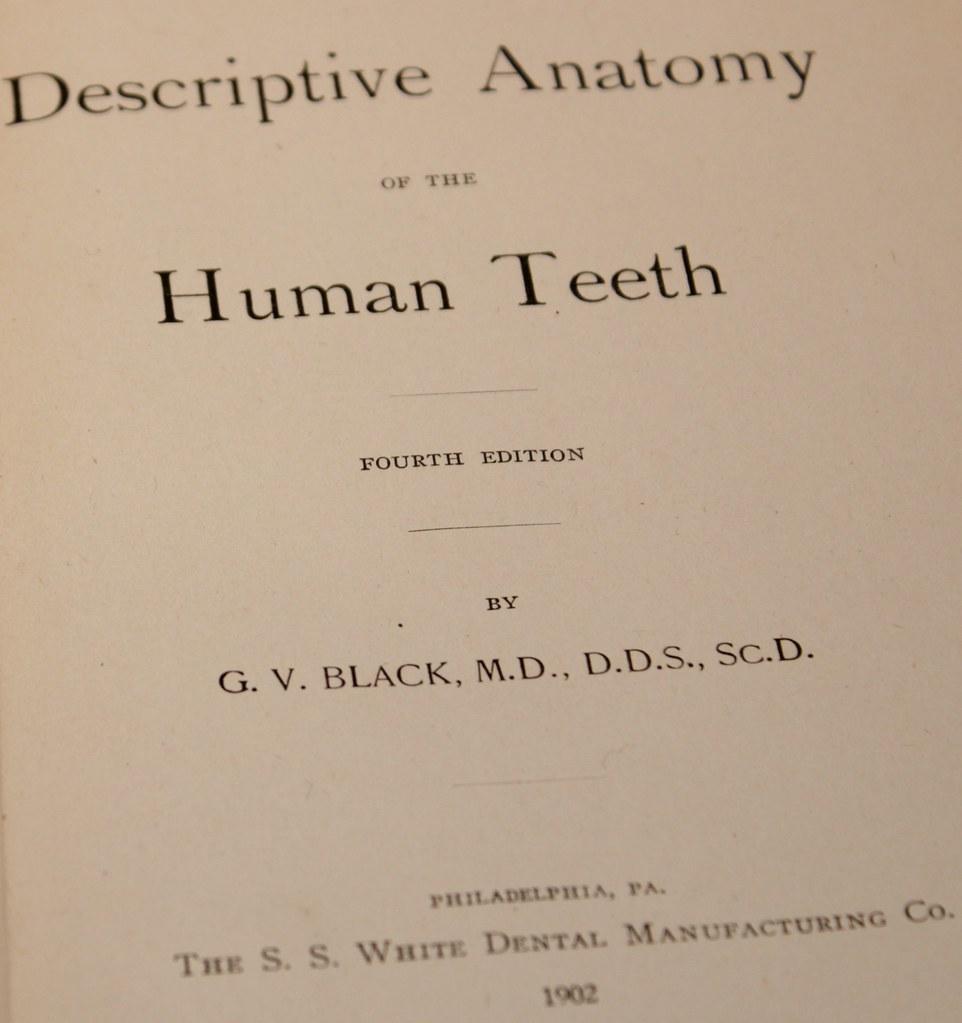 Descriptive Anatomy Of The Human Teeth 1902 Lots Of Etchi Flickr