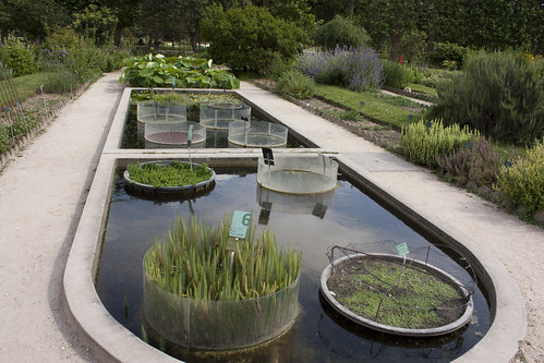 Jardin des plantes aquatic plants ricardo zappala flickr for Jardin 8 zapala