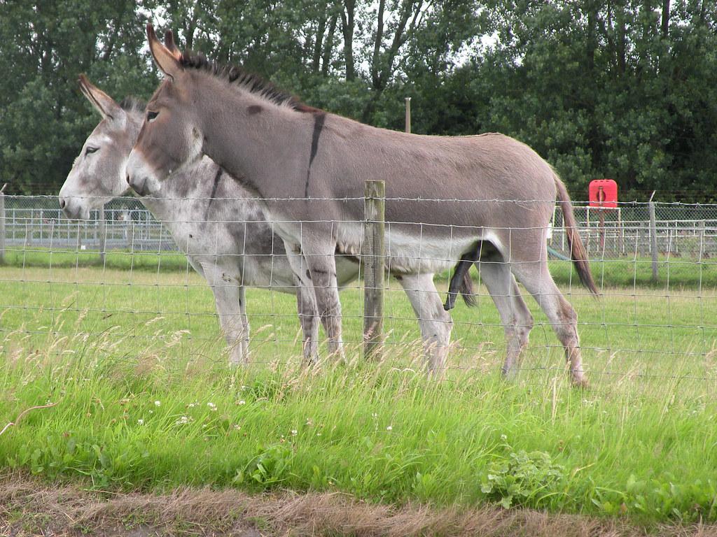 naughty donkey!! | Phil | Flickr