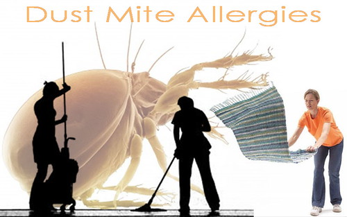 Treatment of Dust Mite Allergies | by Adams999