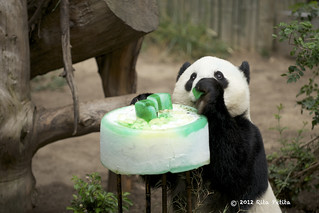 Happy Birthday Yun Zi! | by Rita Petita