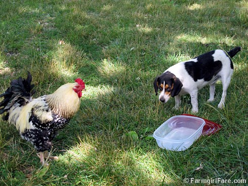 Bert and Mr. Fancy Pants (2) | by Farmgirl Susan