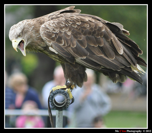 Preston Park Bird Show S 045 | by Me 2 You Photography 600,000+ Views