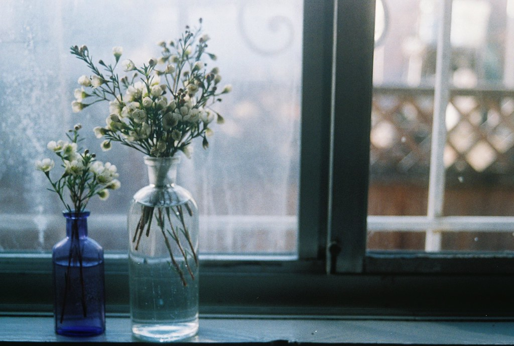 Beautiful ... Wax Flowers On The Windowsill | By Sam Shorey