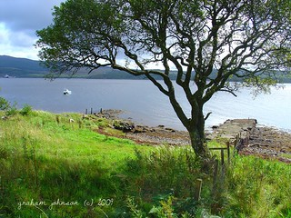 Tree by the loch (EXPLORED) | by gmj49