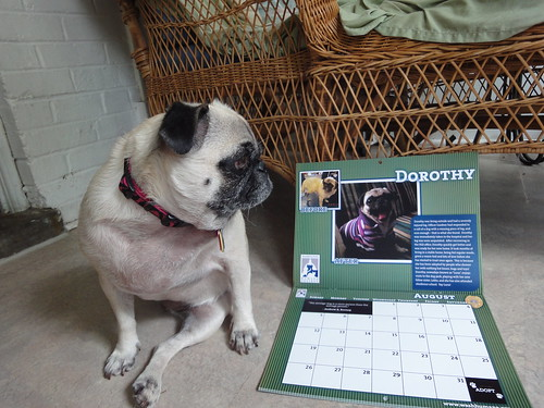 Miss August seems unimpressed with fame | by wombatarama
