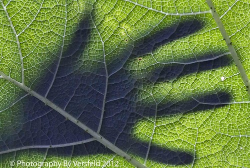Shadow hands - all in vein | by Photography by Versfeld