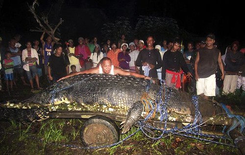giant-saltwater-crocodile-found-philippines-night_39955_600x450 | by lucycookie