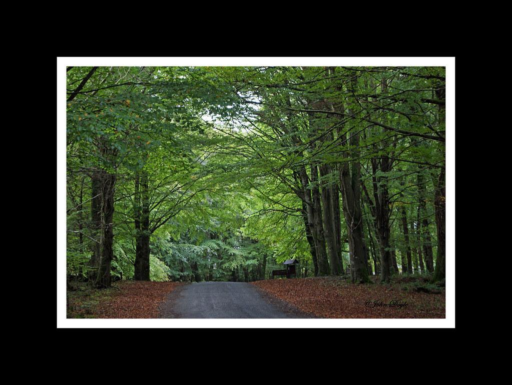 Emo woods