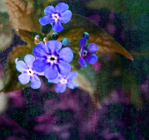 Forget Me Not...Please | by Veke47