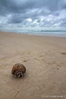 Coconut on the beach | by andiwolfe