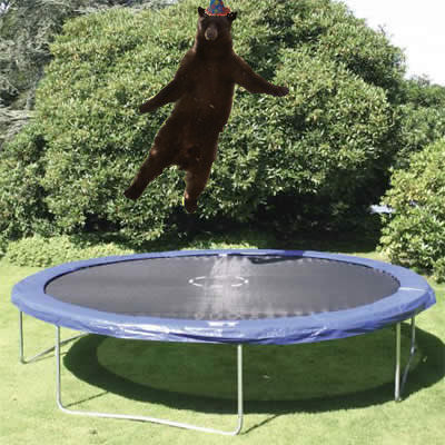 Image result for trampoline flickr