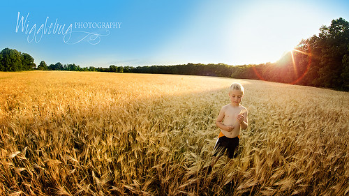 lane in wheat field copy | by wigglebug photography