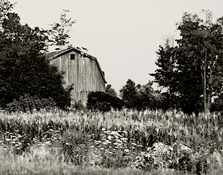Old barn | by LindaB.