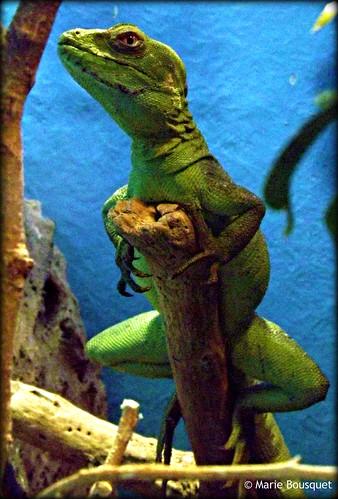 Comment a j 39 ai des des cuisses de grenouille marie - Comment cuisiner des cuisses de grenouilles surgelees ...