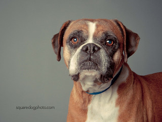a408930 Lennox | by Charlie the Cheeky Monkey