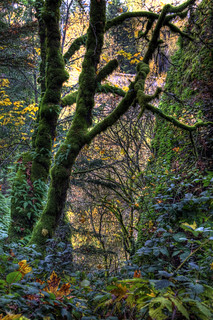 IMG_2958_59_60_Flora near Multnomah Falls | by Glenn Gilbert