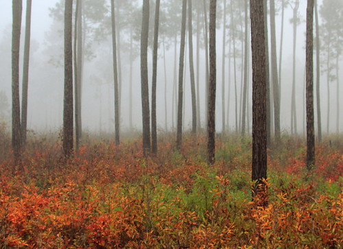 Foggy Autumn Woods | by Lana Gramlich