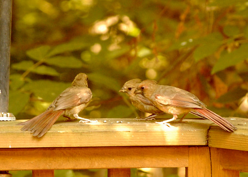 Cardinal family June 30 2012 (2) | by tommaync