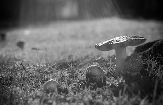 Mushrooms | by Steve_Ting