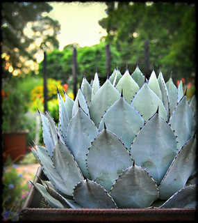 Week #28 Jagged - Blue Agave | by JewelsOK