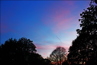 Tonights Sky May Photo A Day: Skyline | by Sue90ca Monday Eclipse...Be Very Careful.