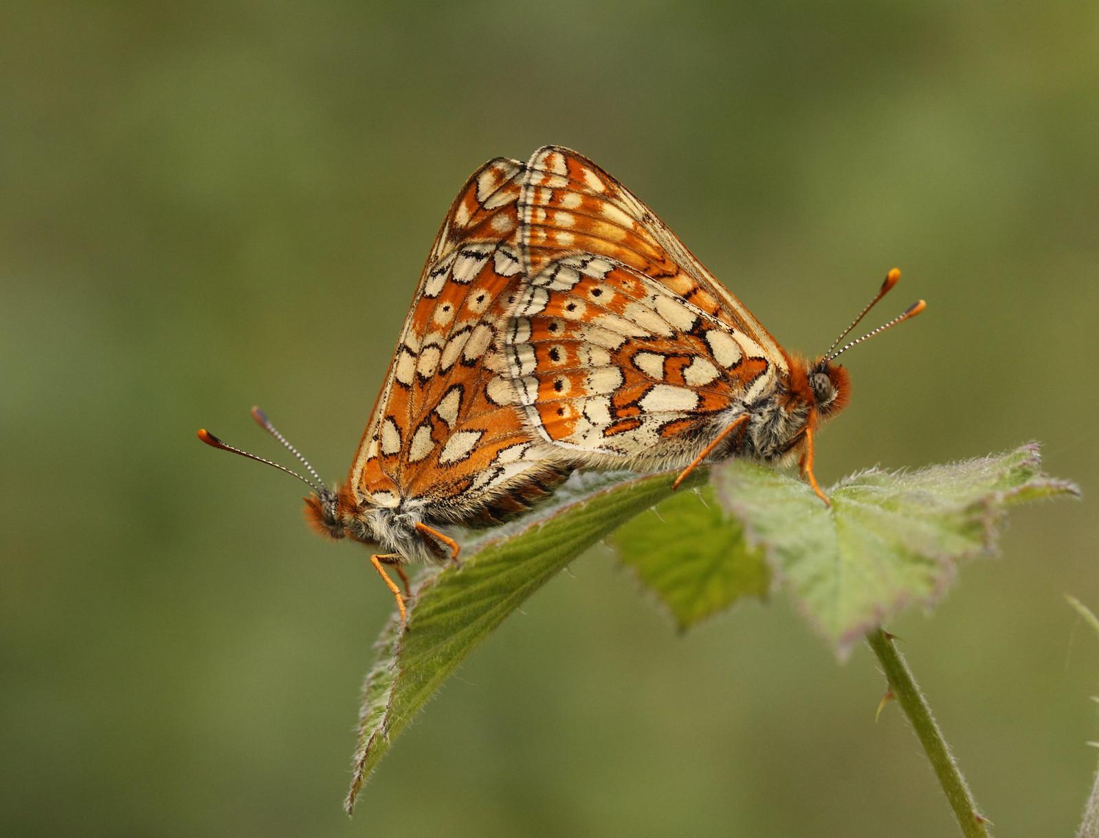 butterfliesandrooks0067