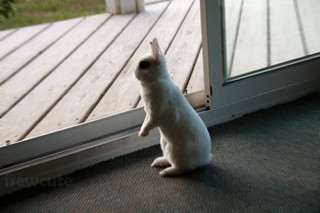 bunny alert Yuki sees a strange dog in the yard | by isewcute