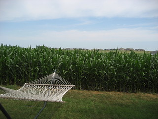 2012-182 Watching the Corn Grow | by mrsdkrebs