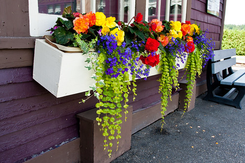 Window boxes | by D. C. Elliott