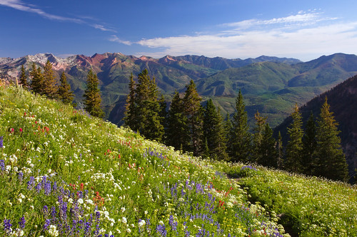 Wasatch Wildflowers | by LonesomeLandscapes.com