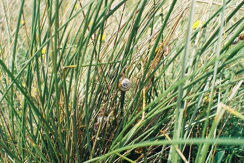 Little snail, Perranporth | by Kirsty Andrews