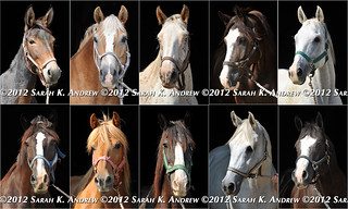 The Faces of Camelot | by Rock and Racehorses