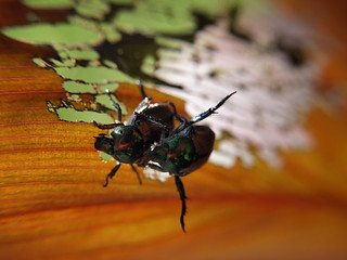 Bugs on a leaf | by AR_the old guy
