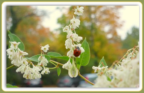--- The Last October Flowers and Ladybird --- | by Rosa Dik 009 -- catching up !