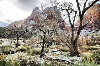 Zion Snow | by Wild Country Photos