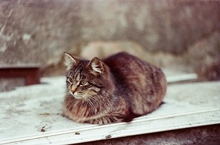 About Street cats | by anna.letoile