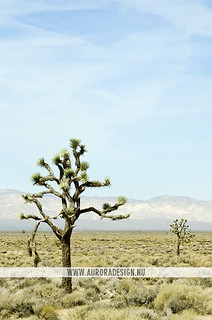 Joshua Tree National Park, Mojave Desert | by Naomi Rahim (thanks for 3.8 million visits)
