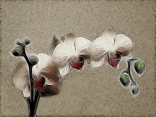 orchid variations 4 | by vernon.hyde