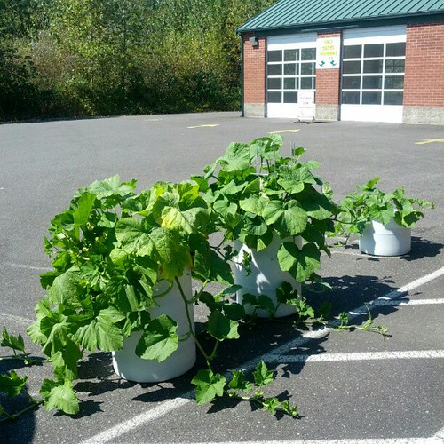 Random container gardening at the car wash | by Chris and Jenni