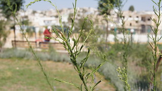 Herbs in Waterwise Park Garden | by DAIGlobal