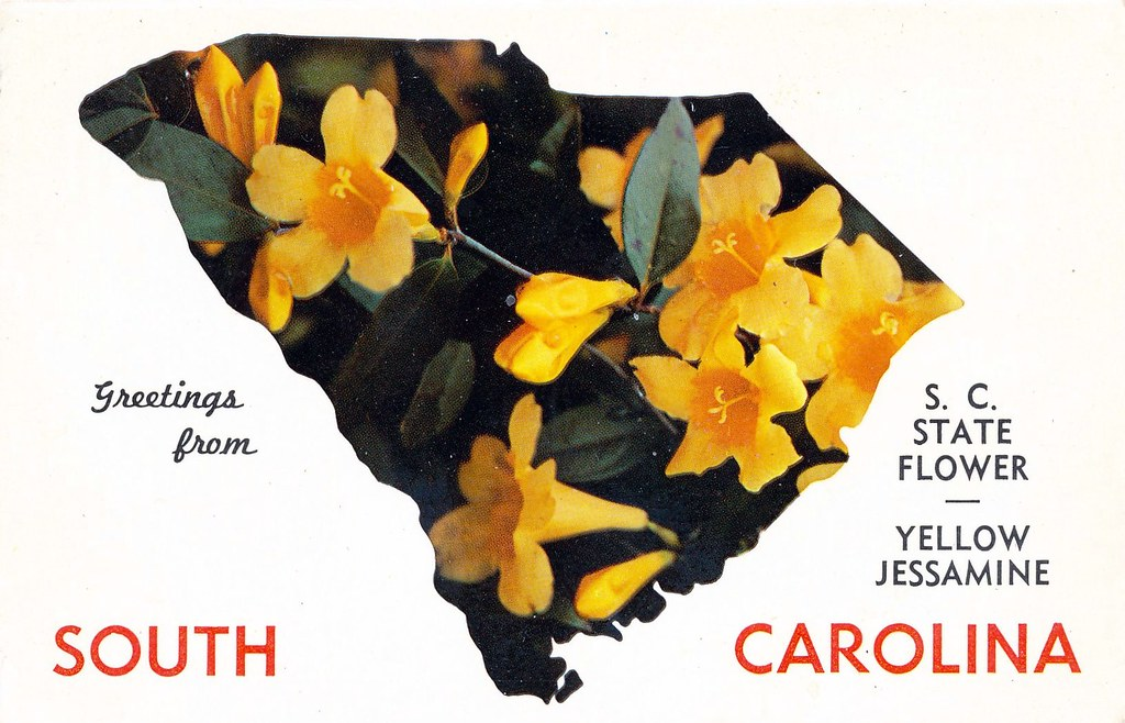 Postcard Greetings From South Carolina Sc State Flower Flickr