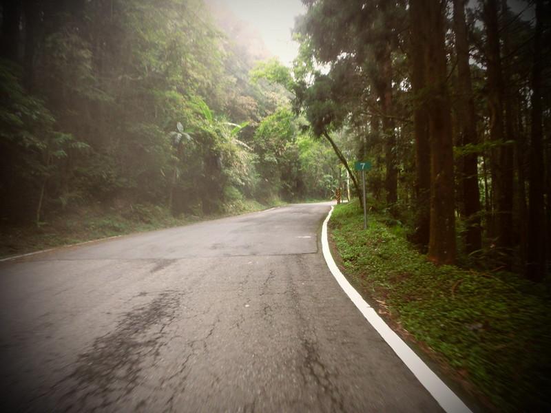 Taiwan Island trips。Couchsurfing。環島景點。南投秘境。忘憂森林。17度C隨拍。  (10)