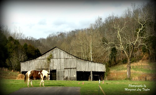 Horse and Barn | by Margaret Taylor2010