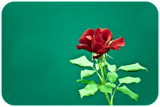 Red Rose on the Green | by Orbmiser
