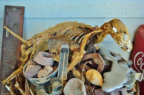 Skeletal Remains Tour