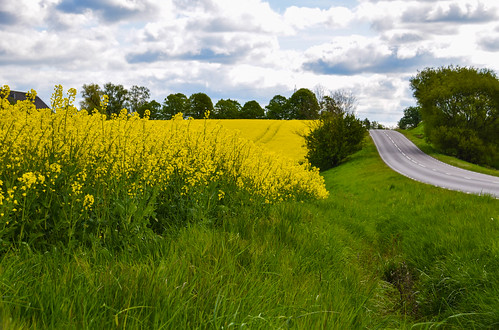 Yellow road | by Maria Eklind