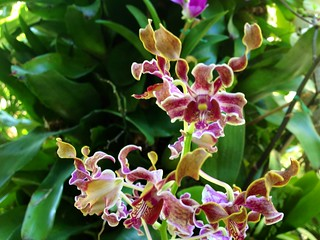 Orchids in EPCOT's Mexico | by Erin *~*~*