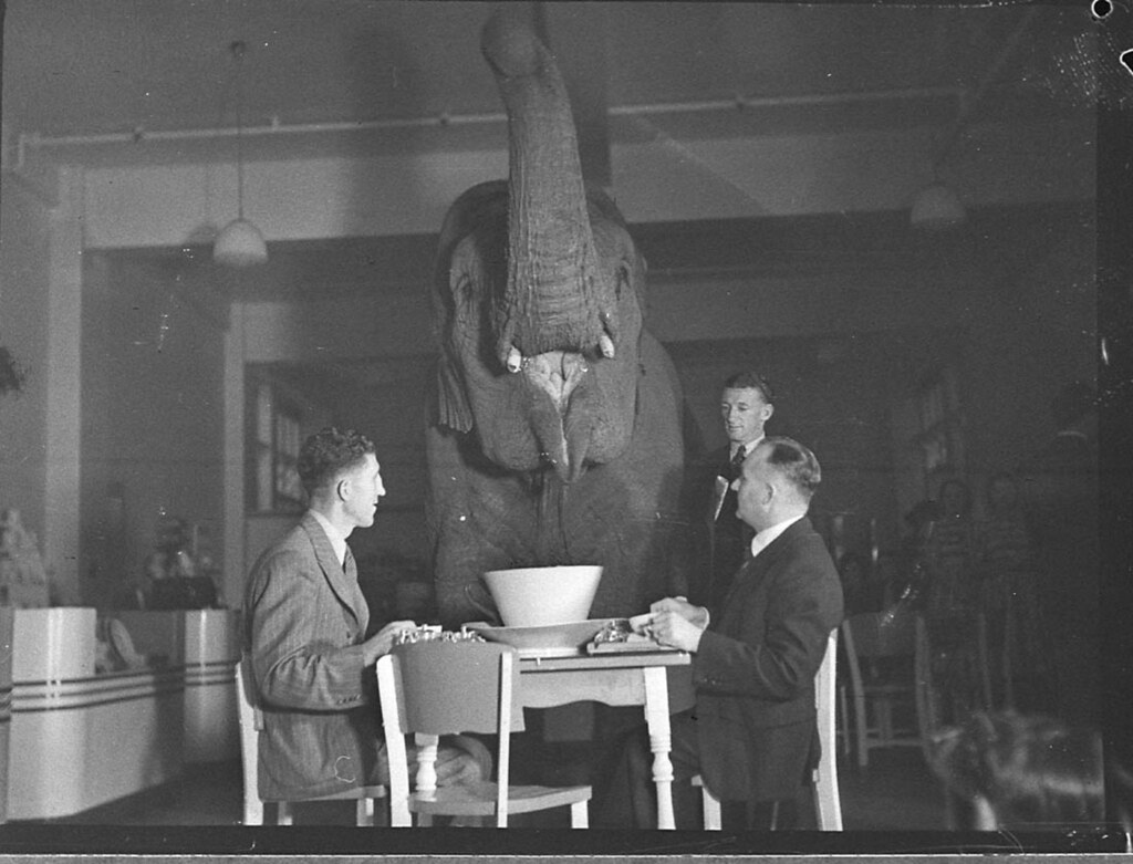 ... Elephant's tea party, Robur Tea Room, 24 March 1939, by Sam Hood |